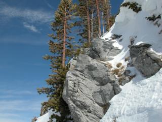 Arbres et rochers près des Tseppes
