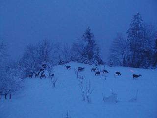 Troupeau de cerfs en hiver
